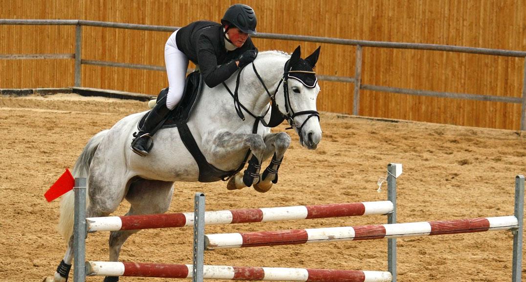 Multi-Treka image with horse